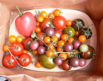 Late Harvest Tomatoes
